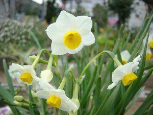 Chon hoa tet de mang lai nhieu may man